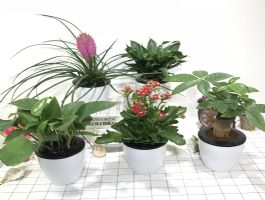 自动吸水小盆栽