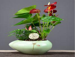 桌面景观盆栽